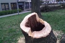 Spitznerovy sady. V rámci obnovy parku muselo jít k zemi 30 stromů, město na podzim vysadí 50 nových stromů