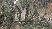 Polomy v lesích. Ilustrační foto