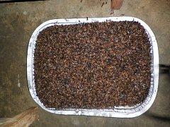 Smažení termiti