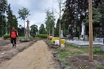 Naruší kořenový systém nově vysázených stromů pomníky a hroby na městském hřbitově? Odborníci tento názor vyvracejí.