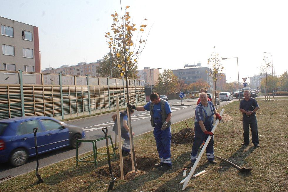 Zástupci města s představiteli firmy Toray vysadili novou alej u parkoviště před nemocnicí.