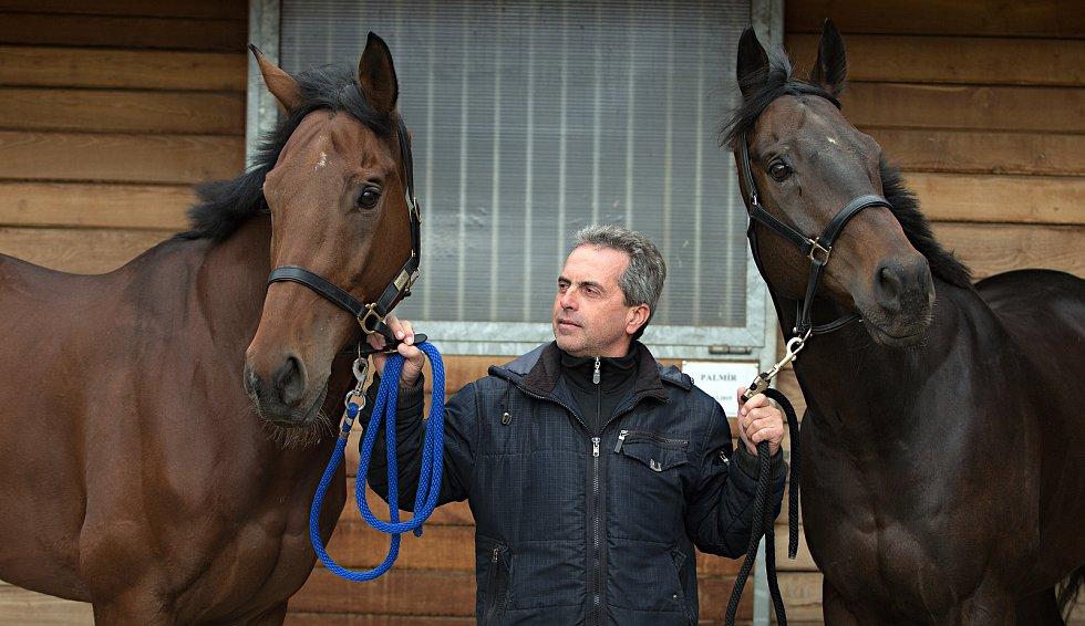 Koně trenéra Stanislava Popelky z Hvozdu u Prostějova se chystají na Velkou pardubickou. Vlevo Mahony, vpravo Stretton, uprostřed trenér Stanislav Popelka.