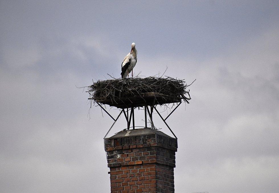 Posel jara v podobě čápa už trůní i na svém komíně v Němčicích nad Hanou.
