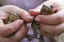 Žáby. Ilustrační foto