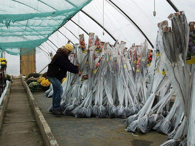 Stromky k výsadbě nabízí i prostějovské zahradnictví Bellis