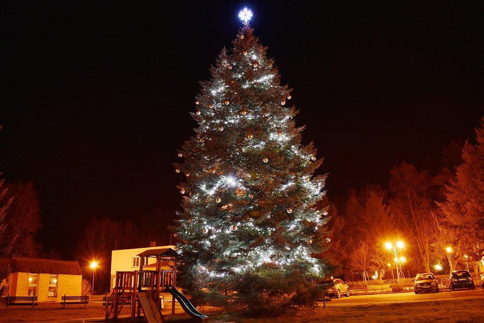 Vánoční strom ve Velkých Losinách.