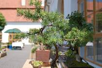 Hody, jarmark a výstava bonsají ve Slatinicích