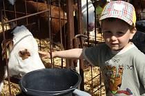 Den otevřených dveří U nás na farmě v Protivanově