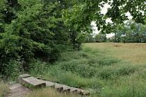 Vypuštěná a zarostlá nádrž, poházené odpadky na dně a na březích. To je současná podoba rybníka v Krasicích