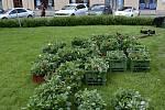 Zeleň v Prostějově
