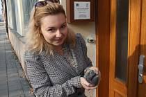 Redaktoři Deníku pomohli zachránit malého holuba