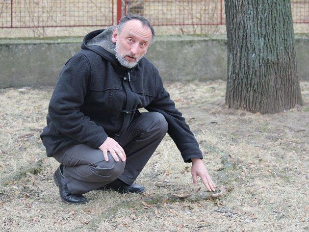 Filmaři Ivanu Stříteskému leží na srdci osud stromů v Mozartově ulici v Prostějově. Všiml si, že mají poraněné kořeny, a apeluje na jejich záchranu
