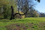 Jarní snímek z Podzámecké zahrady v Kroměříži