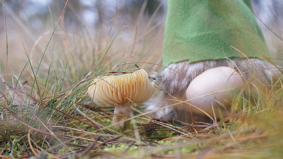 Vánoční houbaření u Nývltů