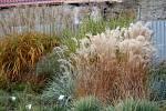 Ti, na které začínají doléhat podzimní chmurné nálady, by měli zajít do prostějovské botanické zahrady Petra Albrechta. Červená, žlutá, fialová, oranžová i různé barvy zeleně, kterými to tu hýří, jim určitě udělají radost.