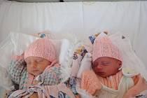 Ivona a Ina Hřivňákovy, Prostějov, narozeny 29. května, 45 cm, 2040 g a 2080 g