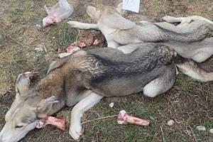 Nález psů ve zbídačelém stavu v Ponikvi
