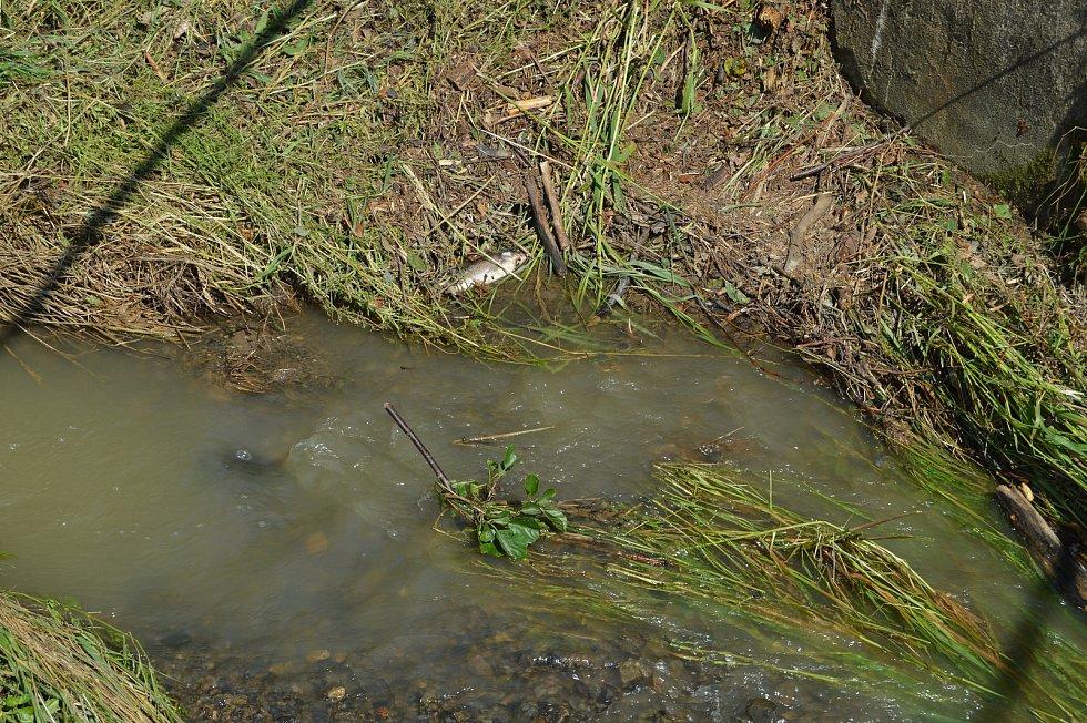 Aktuálně jde vidět zbytky po úklidu  naplavenin z nedalekého lesa.
