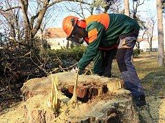 Kácení stromů ve Smetanových sadech