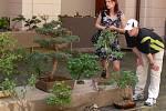 Na výstavě v konickém zámku byly k vidění nejen tradiční bonsaje z borovice, ale také například z hrušně.