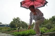 Jarmila Podhorná mezi bylinkami