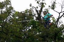 Ořezávání odumřelých větví na stromech ve Smetanových sadech