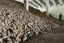 Zemědělské družstvo Vrbátky, sklad brambor,  21. dubna 2021