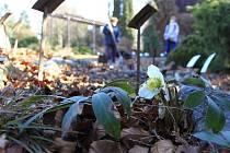Botanická zahrada v březnu