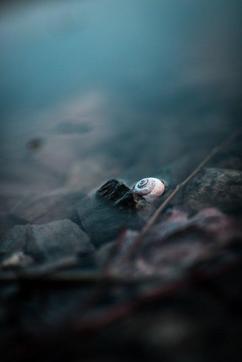Jaro na Šumpersku - konce března 2020 - Polický rybník