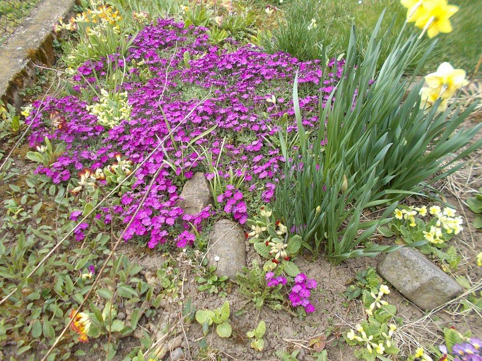 Zahrádka u Lošťákových je už v plném květu