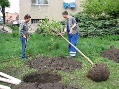 Na prostějovském sídlišti Šárka vysadili členové Okrášlovacího spolku šest stromů.