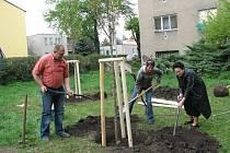 Sázení stromů na prostějovském sídlišti Šárka. Ilustrační foto