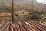 Těžba dřeva ve vojenských lesích u Prostějoviček