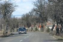 Stromy rostou těsně vedle silnice a kořeny narušují podloží vozovky.