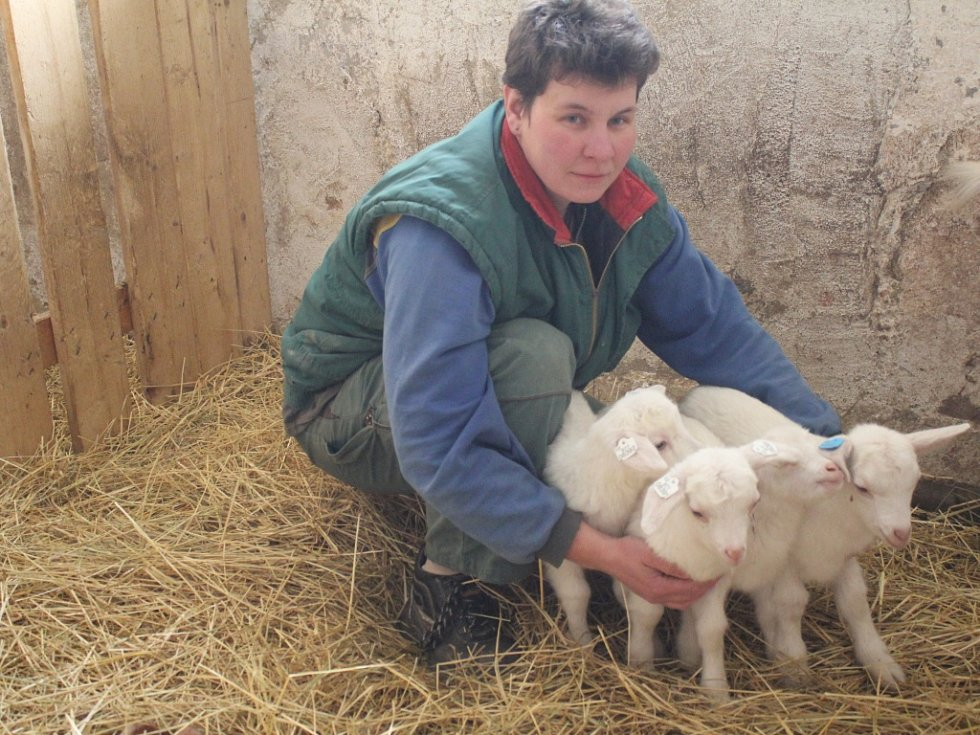 Kozí farma Nikáda v Koválovicích-Osíčanech