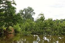 Do zámeckého rybníka v Čechách pod Kosířem se zřítil letitý dub.