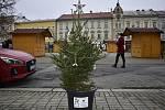 Centrální prostějovské náměstí se halí do vánočního hávu. Ozdobený už je vánoční strom a desítky malých smrčků. 26.11. 2020