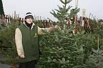 Prodej vánočních stromků se rozjel i před prostějovskými supermarkety
