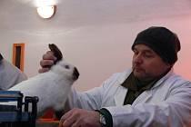 Chovatelé králíků se sjeli v sobotu do Kostelce na Hané, aby obohatili novými přírůstky své chovy.