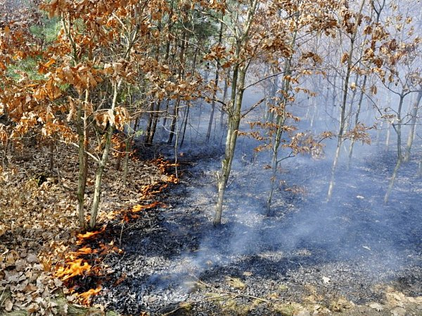 Požár lesa vKobylničkách