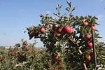 Sad jablek v Mostkovicích