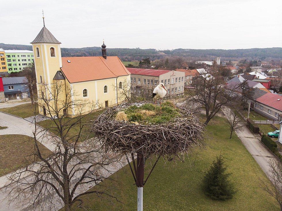 Čáp v Bohuslavicích na Prostějovsku, březen 2021
