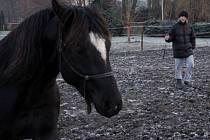 Koně na statku v Hradčanech