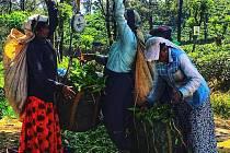 Srí Lanka a čajové plantáže