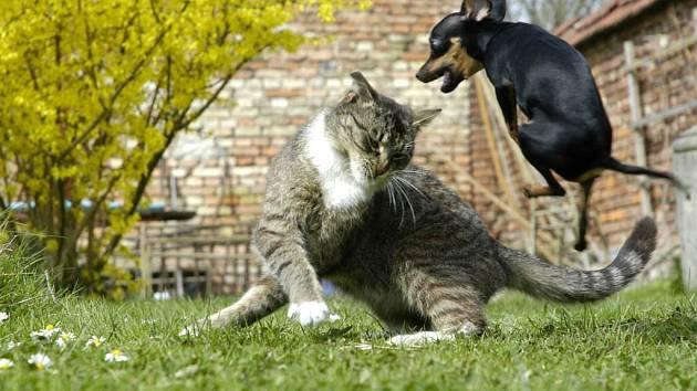I malí psi dokážou být nebezpeční.