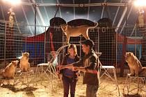 Na výcviku lvů v cirkusu Humbertu