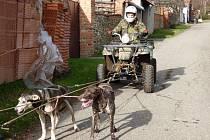Evropští saňoví psi v deseti klidně zvládnou utáhnout osobák, v osmnácti vám odtáhnou náklaďák