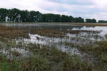 Zatopené pole u Mořic - 24. 6. 2010