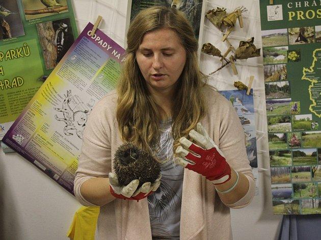 V Irisu uspávali ježky.