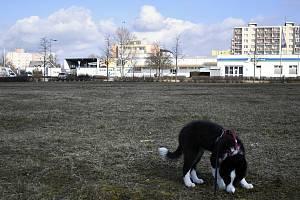 Psí loučka v Plumlovské ulici - 15. března 2020